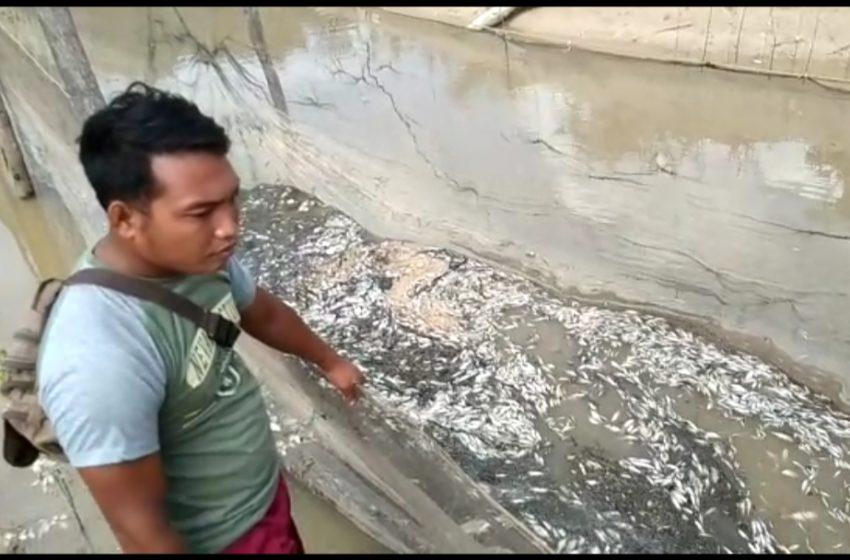 Puluhan Ton Ikan Mati Mendadak