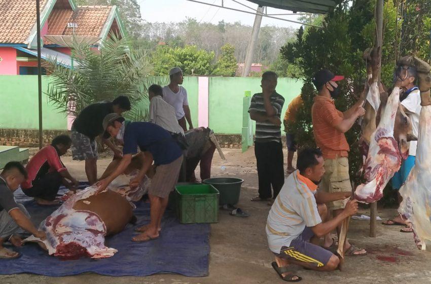 Pengurus Masjid Raudhatul Jannah Desa Talang Ipuh Potong Hewan Qurban