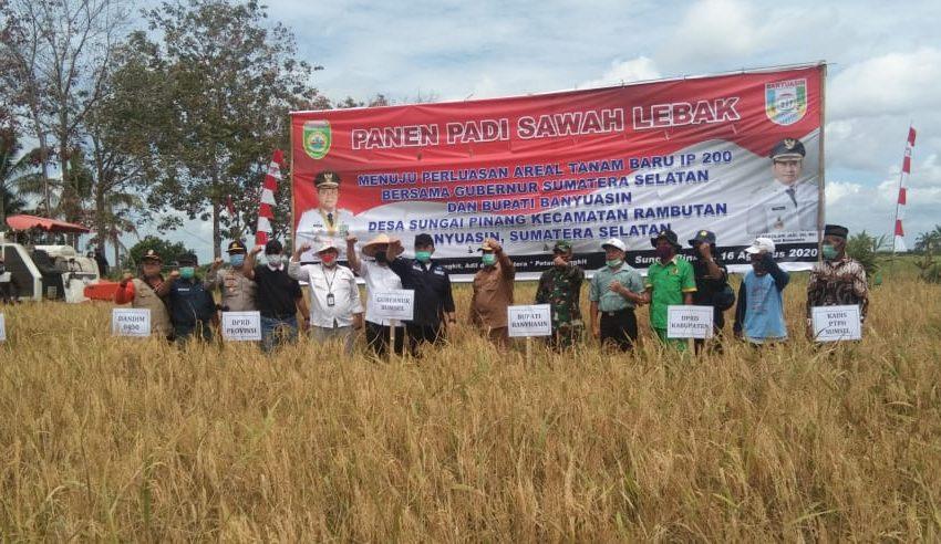 Gubernur Sumsel Panen Padi di Sawah Lebak