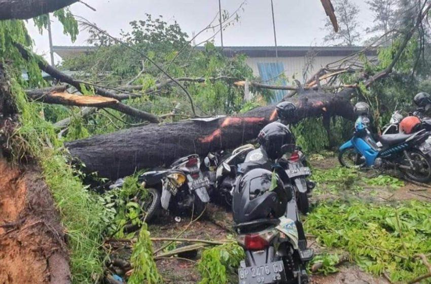 Akibat Hujan Disertai Angin Kencang, Puluhan Pohon Roboh dan Rumah Warga OKU Rusak